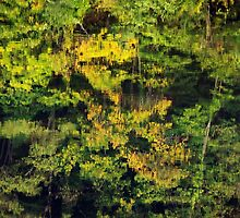 Autumn reflections in the Rhone river by Patrick Morand