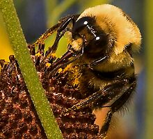 Bumble Bee: Pollen Collector by edigimag