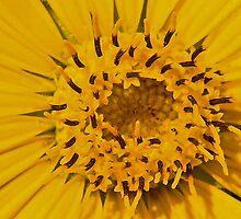 Pollen Pantry by edigimag