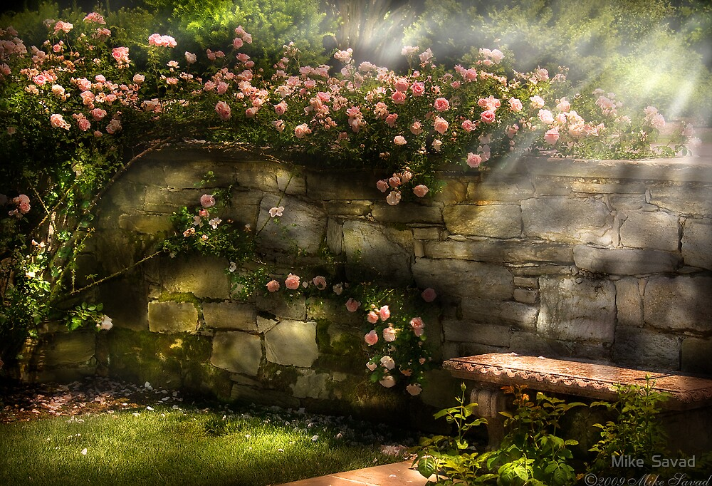 In the rose garden by Mike  Savad