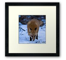 Scent Trail Framed Print