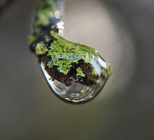 lichen drop 1 by Lenny La Rue, IPA