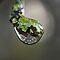 Mosses, Lichen and Algae