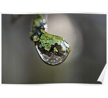 lichen drop 1 Poster