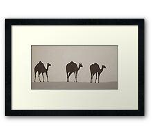 Three Camels Framed Print