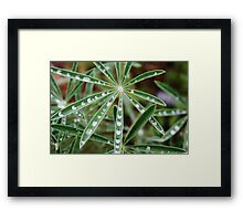 Droplets of Water Framed Print