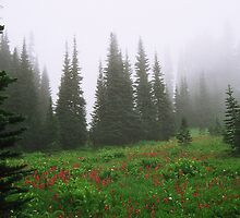 Mt. Rainier National Park by Julia Washburn