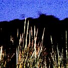 Reeds by Emma  Pettis