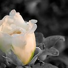 Last bud before winter by lilcanuk