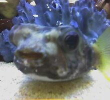 Fish Funny Face by WaleskaL