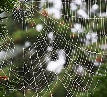 Spider Web by Julia Washburn