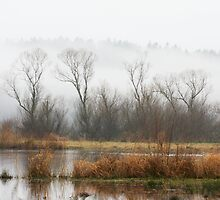 Morning Fog by Julia Washburn