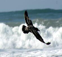Spread your wings; So. Morro Bay, California, USA (594 Views 9/15/2011) by leih2008