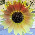 LOOKING  INTO A  SUNFLOWER    by fiat777