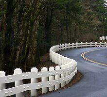 Long winding road, Columbia Gorge, Oregon by aussiedi