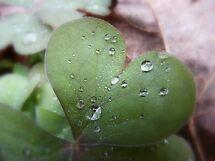 LOVE-Mother Nature by rasnidreamer