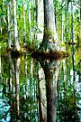 Swamp Tree Reflections by Mary Campbell