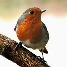 Robin by Geoff Carpenter