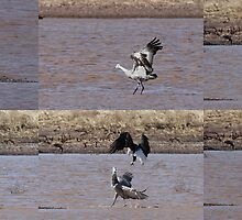 Bald Eagle & Sandhill Crane by tomryan
