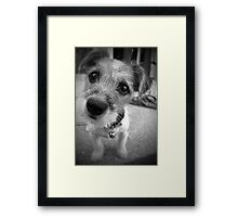 Yes Master, I'm All Ears Framed Print