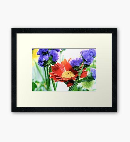 colours Framed Print