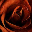 Amber Rose by Silvia Ganora