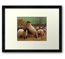 Its Sweeter Here. Framed Print