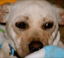 Puppy Love by Nadine Rippelmeyer