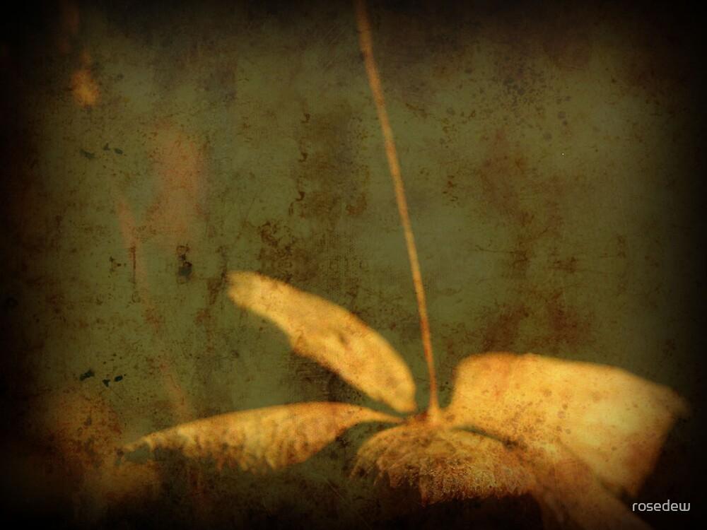 A Flower in Winter by rosedew