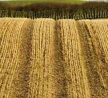 Striped fields by Lars Clausen