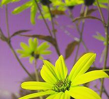 Yellow Flowers with Purple Sky by jojobob