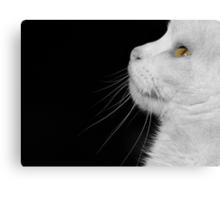 Casper In Profile Canvas Print