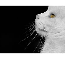 Casper In Profile Photographic Print