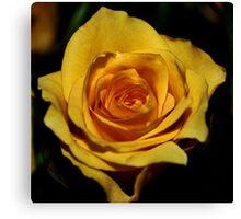 One rose! Canvas Print