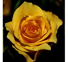 One rose! Photographic Print
