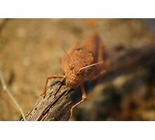 Desert Grasshopper Photographic Print