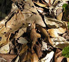Leaf Chameleon Camoflage by Ollie de Brett
