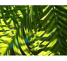 Dublin Green Leaves Photographic Print