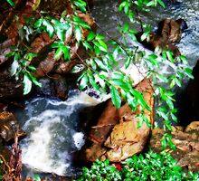 """The Creek"" by debsphotos"