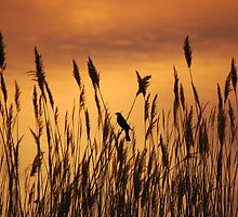 Bird in the Rushes at Sunrise by blindwolfspirit