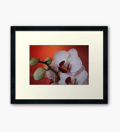 Bursta Framed Print