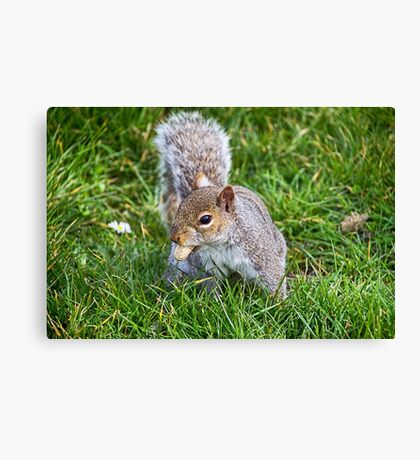 Snack Time For Squirrels Canvas Print
