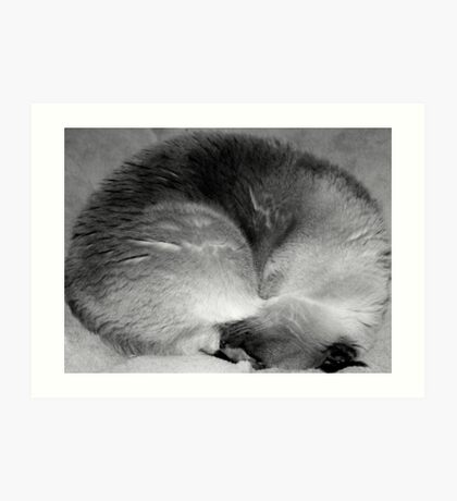Curled into a little ball Art Print