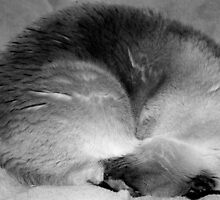 Curled into a little ball by alina98