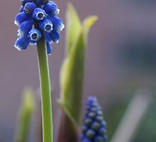 Double Blue by AnnieSnel
