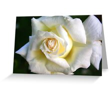 White Rose: Purest Love Greeting Card