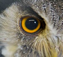 Wise Eye by Nala