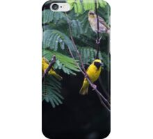 Southern Masked Weaver iPhone Case/Skin