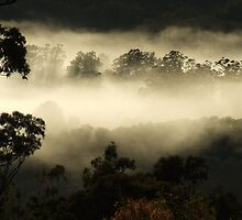 """""""Gums in the Mist"""" by debsphotos"""