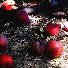 Fallen Fruit  by Emma  Pettis